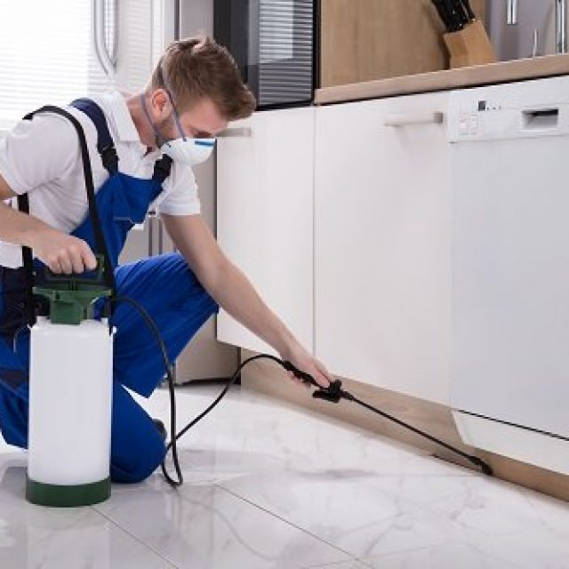 How To Choose The High-Quality Pest Exterminator